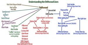 Understanding the Driftwood Lines
