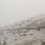 Horse drive blizzard