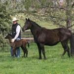 Imprinting a new colt