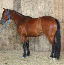 LMP Little Sycamore SOLD