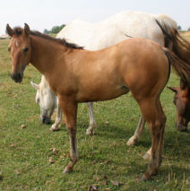 Wilma filly