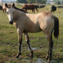 Wood Bunny filly SOLD